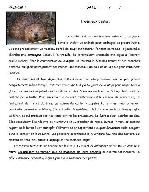 Le castor - Cm1 - Cm2 - Lecture - Texte informatif ...