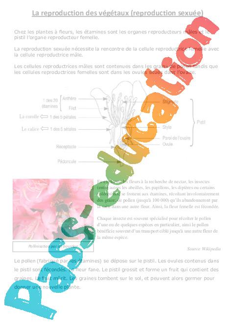 Reproduction des végétaux - Exercices - Ce2 - Cm1 ...