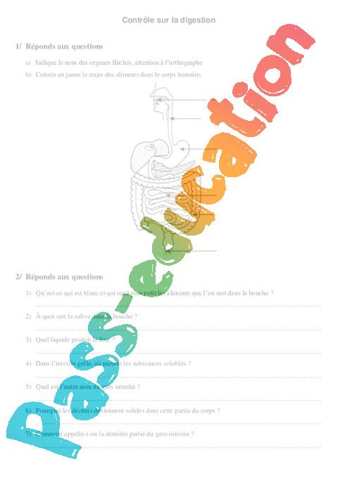 Digestion - Ce2 - Cm1 - Evaluation - Pass Education