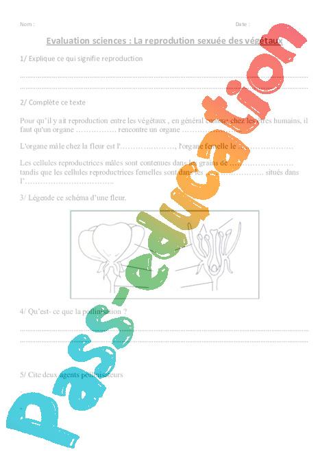 Reprodution Sexuee Des Vegetaux Ce2 Cm1 Evaluation Pass