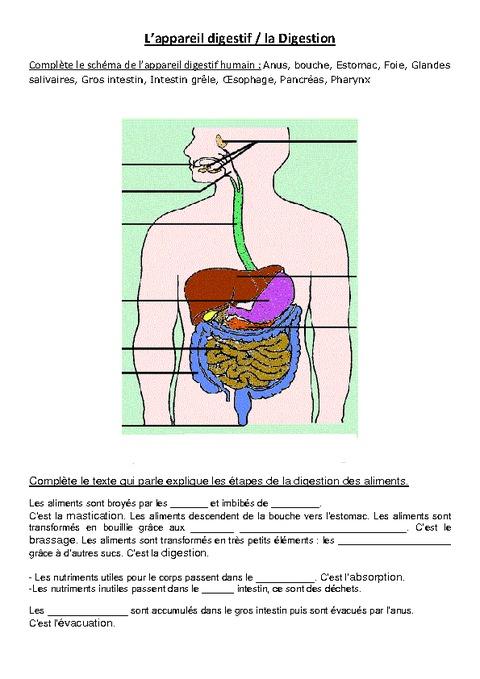 L'appareil digestif - Exercices - Ce2 - Cm1 - Sciences ...