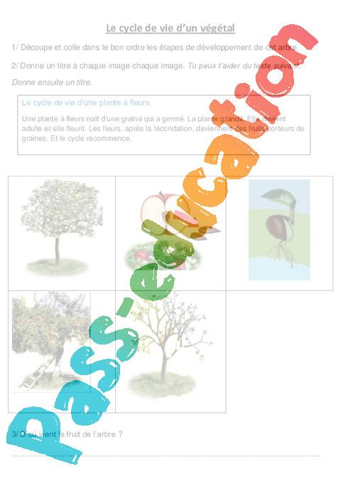 Cycle de vie d un v g tal le pommier exercices ce2 cm1 sciences cycle 3 pass education - L arbre le pommier ...