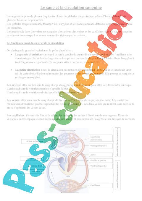 la circulation sanguine cm1