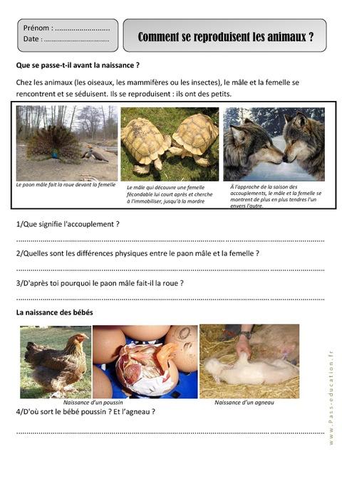 Célèbre Reproduction des animaux – Ce1 – Monde animal – Exercices  JO96