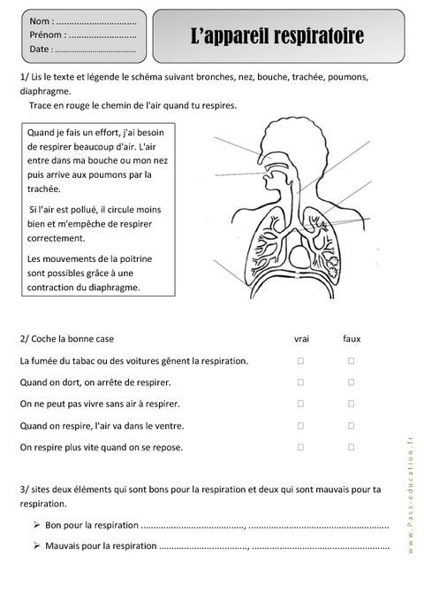 Favori Appareil respiratoire - Ce1 - Respiration – Exercices – Découverte  VB32