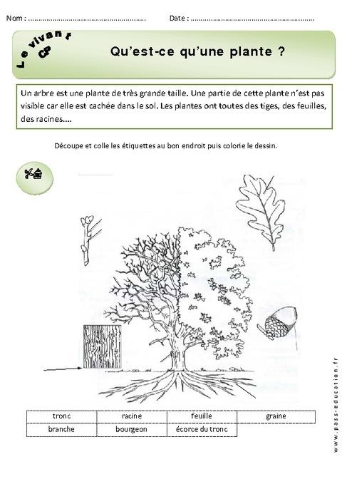 qu'est ce qu'une plante – cp – exercices – découverte du monde