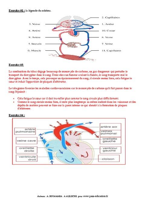 Rôle de la circulation sanguine dans le fonctionnement de ...