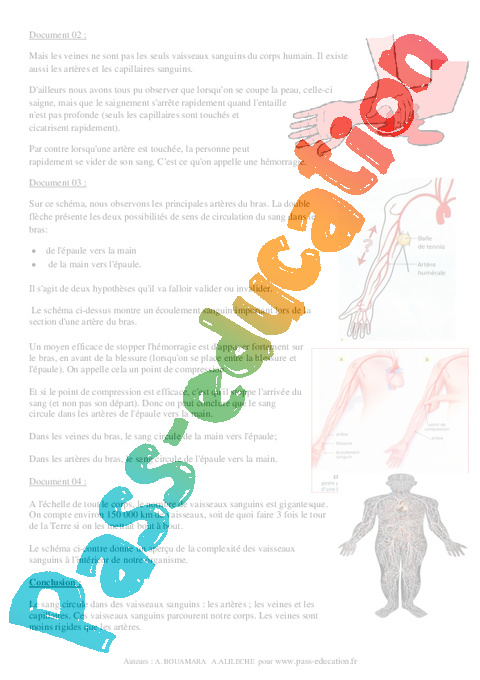 role de la circulation sanguine