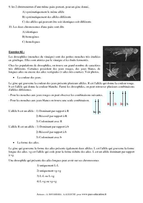 Information génétique - 3ème - Exercices corrigés ...