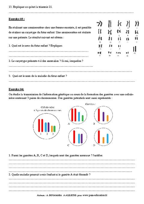 Transmission de l'information génétique - 3ème - Exercices ...
