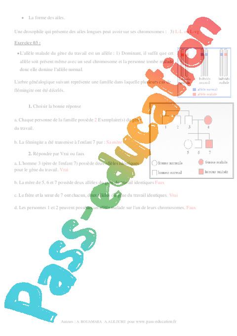 Information génétique – 3ème – Exercices corrigés ...