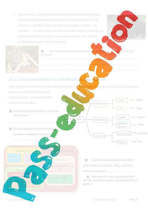 classification des tres vivants 6 me exercices pass education. Black Bedroom Furniture Sets. Home Design Ideas