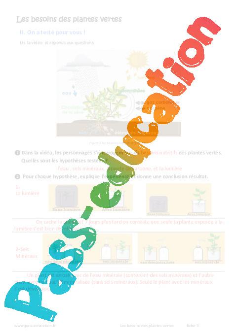 Besoins des plantes vertes exercices 6eme primaire for Recherche sur les plantes vertes