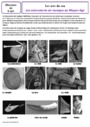 Leçon et exercice : Arts du son : CM1