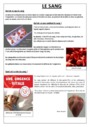 Exercice La circulation sanguine : CM2