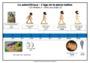 Leçon et exercice : L'origine des hommes : CM1