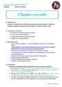 Leçon et exercice : La sensibilité : CM1