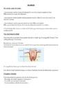 Leçon et exercice : Les dents : CE2