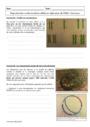 Cours et exercice : Reproduction cellulaire et réplication de l'ADN : Première S - 1ère S