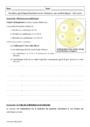 Cours et exercice : Variation génétique bactérienne et résistance aux antibiotiques : Première