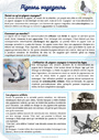 Leçon et exercice : Autres thèmes : CE1