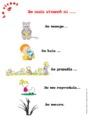 Leçon La classification des animaux : CP