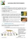 Cours Planète terre, êtres vivants et environnement : 6ème