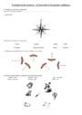 Evaluation La boussole : CE2