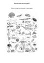 Exercice La classification des animaux : CM1