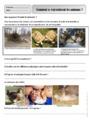 Exercice La reproduction des végétaux et des animaux : CE1