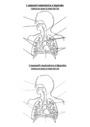Exercice La respiration : CM2