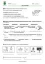 Exercice Vocabulaire Homonymes, homophones : CM1