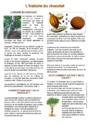 Leçon et exercice : Pâques : CM1