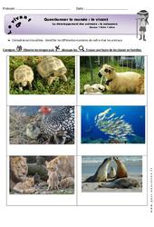 Naissance – Exercices – Séance 1 – Développement des animaux – Fiches élève : 1ere Primaire