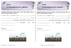 Développement des végétaux – Cours, Leçon : 2eme Primaire