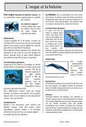 L'orque et la baleine – Lecture compréhension : 4eme, 5eme Primaire