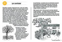 Le cerisier – Lecture compréhension – Histoire illustrée – Niveau 3 : 2eme Primaire