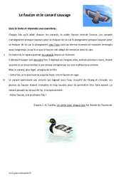 Le faucon et le canard sauvage – Lecture – Conte : 6eme Primaire