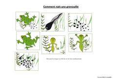 Comment nait une grenouille – Exercices – Sciences : 3eme, 4eme Primaire