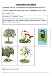 Cycle de vie d'un végétal – Le pommier – Exercices – Sciences : 3eme, 4eme Primaire