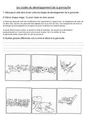 Stades du développement de la grenouille – Exercices – Sciences : 3eme, 4eme Primaire
