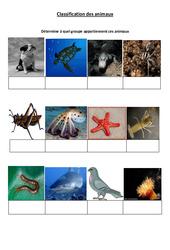 Classification des animaux – 2 – Exercices – Sciences : 4eme Primaire