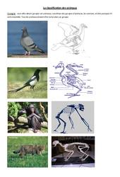 Classification des animaux – 1 – Exercices – Sciences : 4eme Primaire