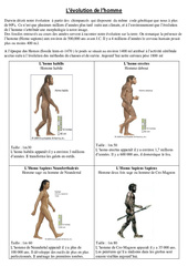 Evolution de l'homme – Exercices – Sciences : 5eme Primaire