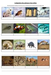 Adaptation des animaux à leur milieu – Exercices – Sciences : 4eme, 5eme Primaire