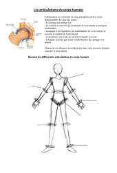 Articulations du corps humain – Exercices – Sciences : 3eme, 4eme Primaire