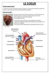 Qu'est ce que le coeur – Exercices – Sciences : 5eme Primaire