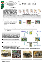 Développement animal – Exercices : 4eme, 5eme Primaire
