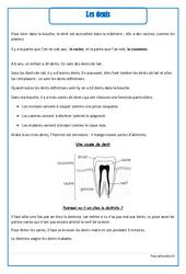Dents – Cours, Leçon – Corps humain : 2eme Primaire