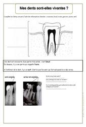 Mes dents sont – elles vivantes – Exercices – Corps humain – Sciences : 2eme Primaire